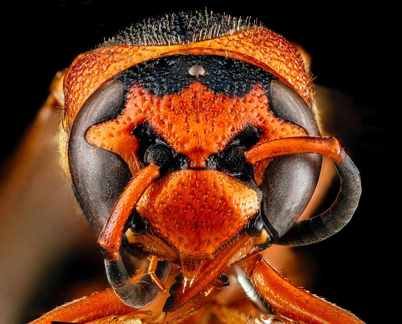 macro photographie insectes